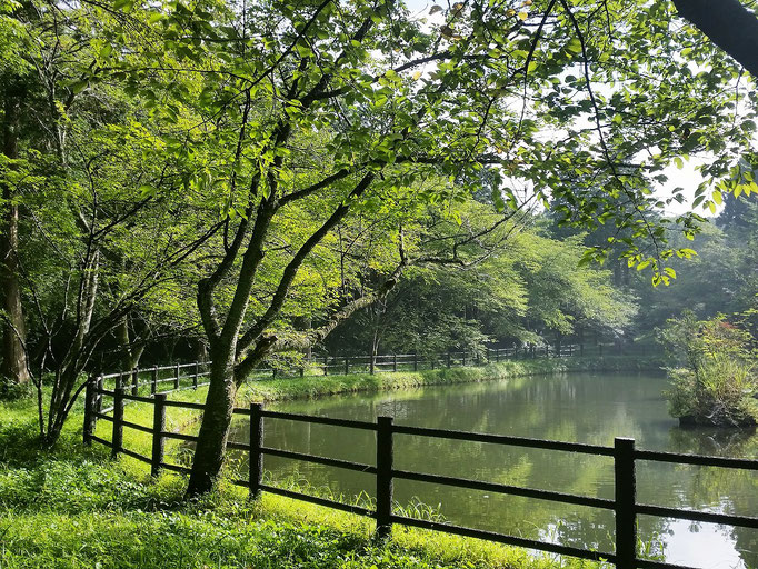 富士見ヶ池も明るくなってきました