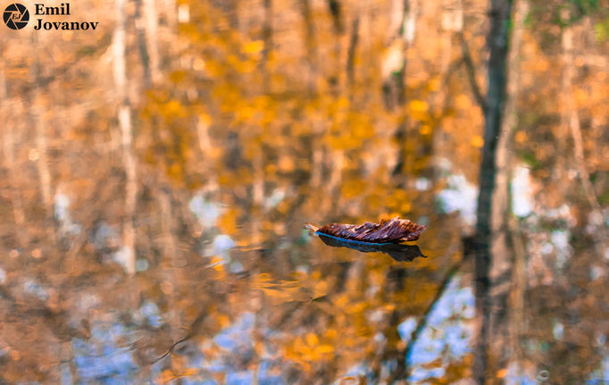 reflections_river_autumn