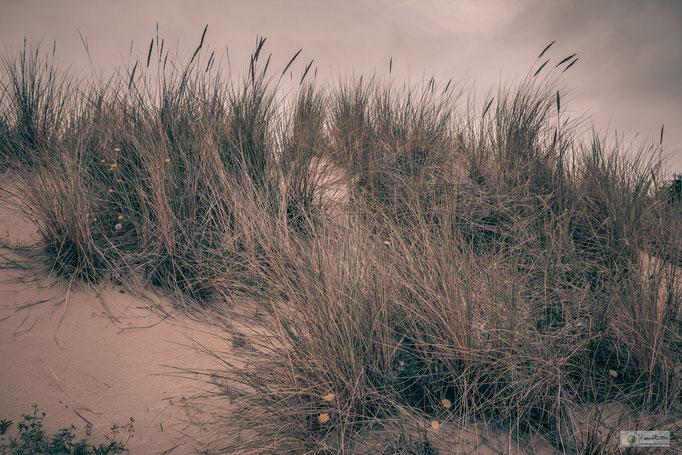 KN15013 Dunes near Cannon Beach