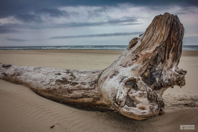 KN15014 Driftwood at Cannon Beach