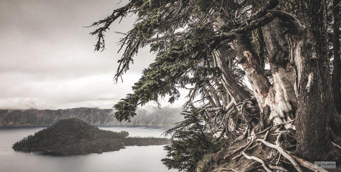 KN15002 Crater Lake und Baumgruppe