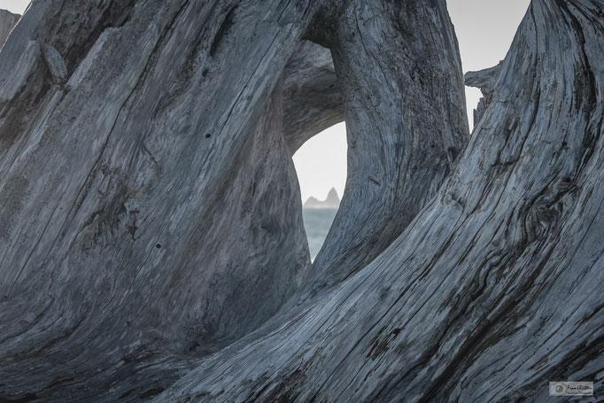 KN15019 Driftwood at Rialto Beach