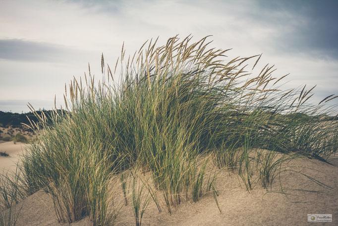 KN15018 Dunes near Cannon Beach 2