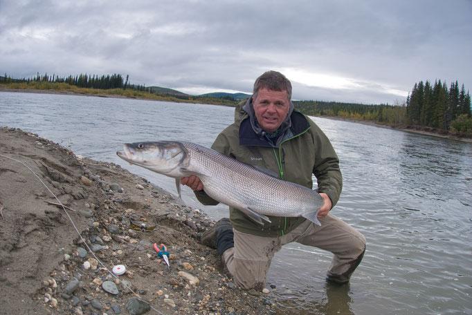 Sheefish Kobuk River, Alaska