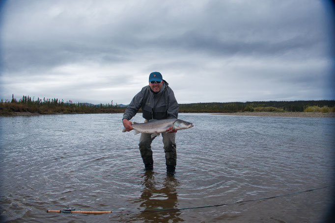 Sheefish Kobuk River, Alaska