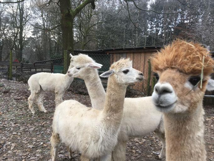 Die kleine Herde kennt sich und so wird Bonito gleich aufgenommen.