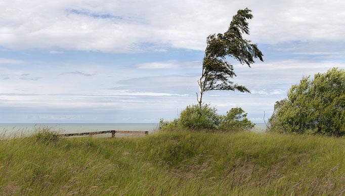 Stürmischer Wind an der Ostseeküste - Lettland