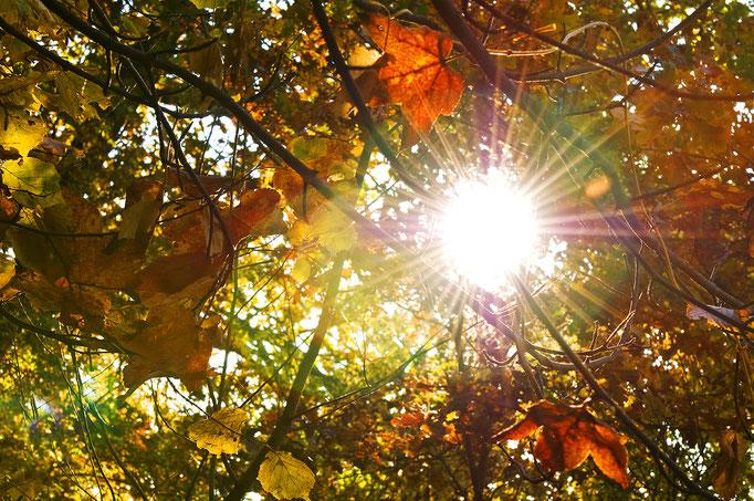 Lichtblick im Herbstlaub - Herzogtum Lauenburg
