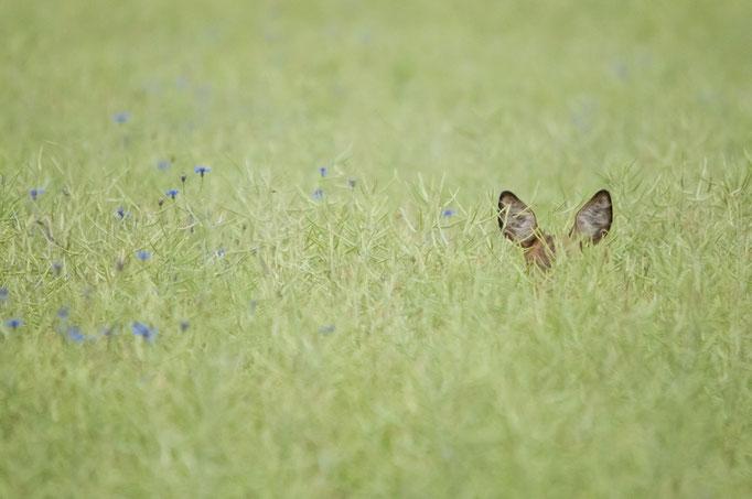 Cache-cache des plus sympas