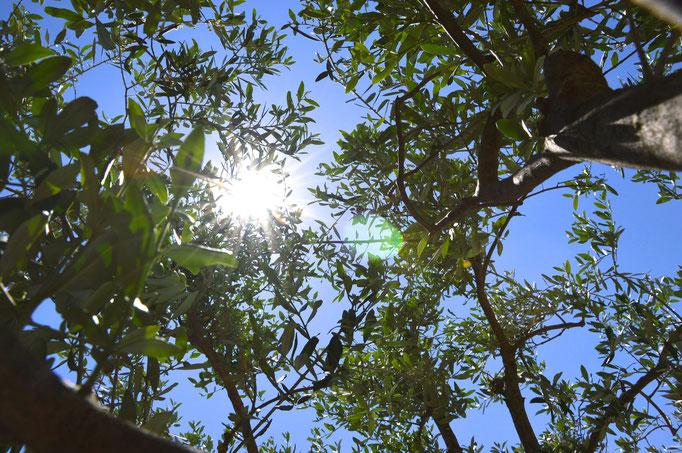 Soleil et olivier - Chambre d'hôtes Provence