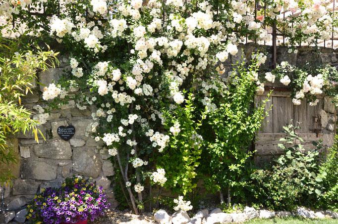 Un jardin authentique - Chambre d'hôtes Provence