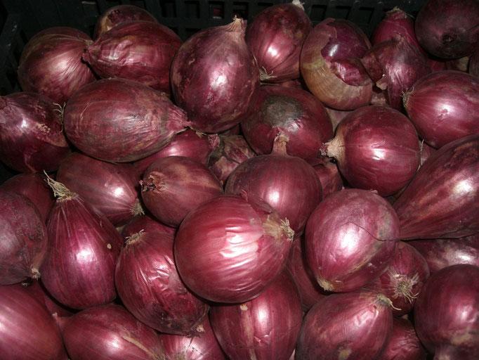 Die typischen roten Zwiebeln
