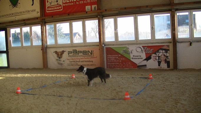 Dog Campus 2014 ein schöner Tag erste mal Training mit Sandboden