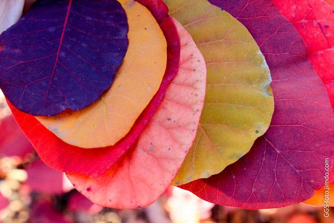 Все цвета осени...