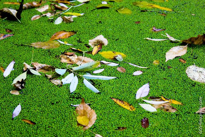 Зелёная заводь.