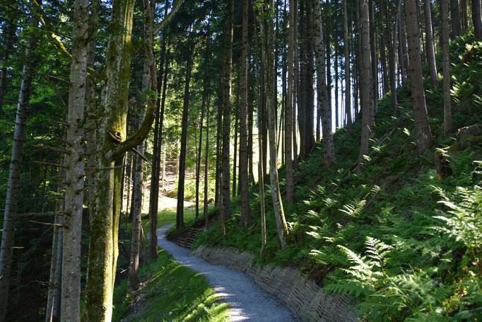 Der Wald als ideales Erholungsgebiet