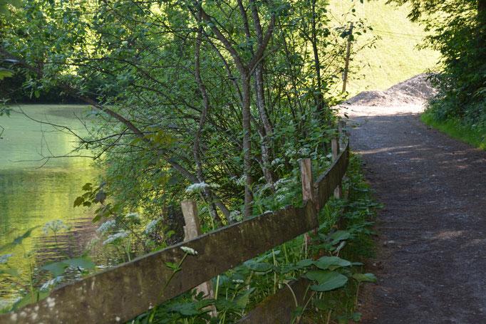 Am Bach entlang zum Badesee