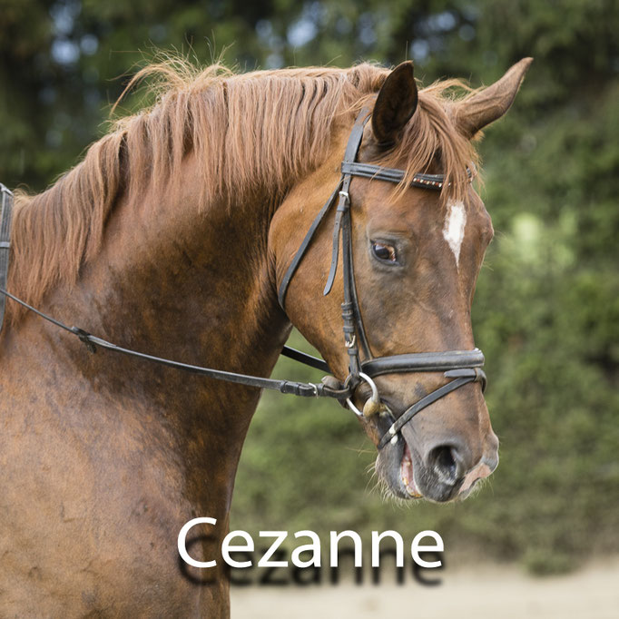 Cezanne-B
