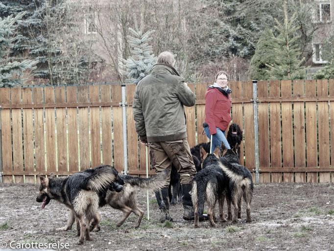 ... die anderen Hunde sollen Abstand halten.