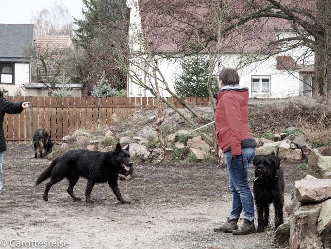 Führung und Verantwortung in Hundebegegnungen