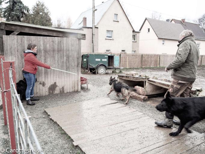 Hundetraining mit Schäferhund-Unterstützung