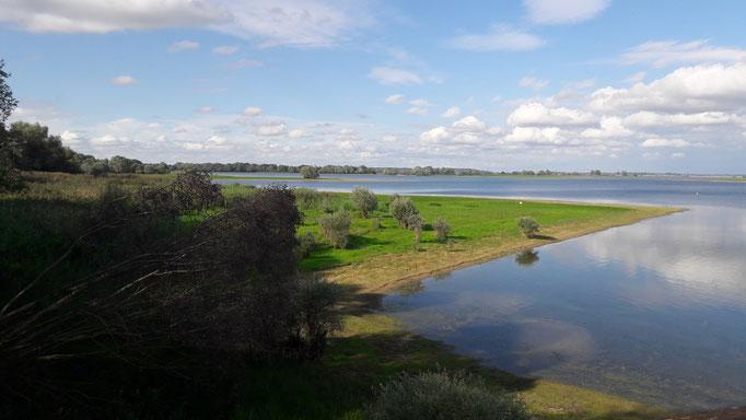 Septembre 2017. Observer les oiseaux au Lac du Der en Champagne avec un guide ornithologue