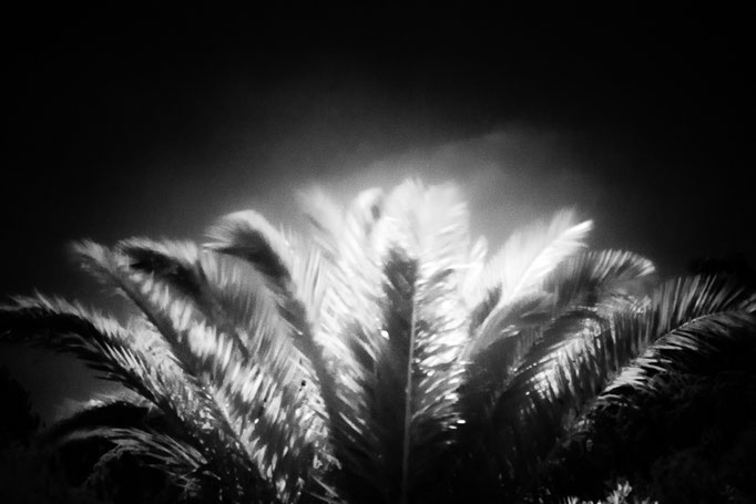 Michael Bennoun - le palmier - the palm tree