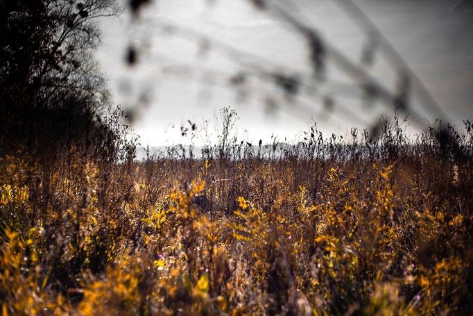 Michael Bennoun - prairie - meadow