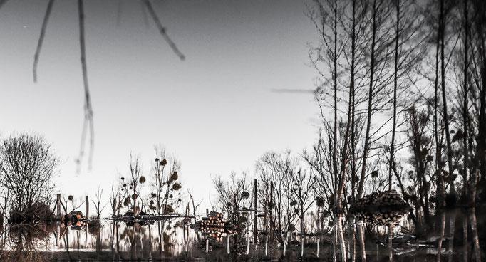 Michael Bennoun - lacs - lakes