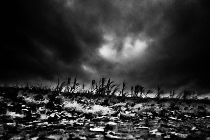 Michael Bennoun - campagne - countryside
