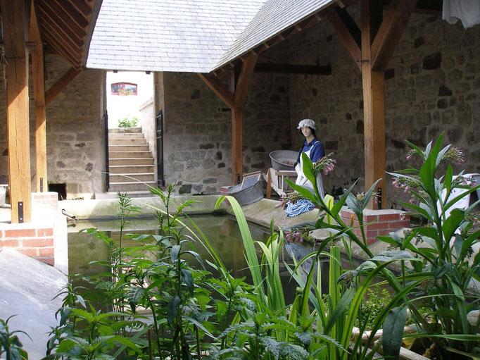 Plantes d'eau dans le lavoir de la Bergeronnette