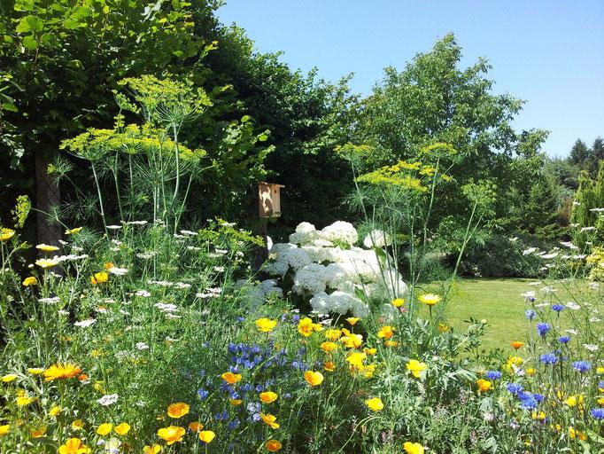 Près de Laon, gite avec jardin fleuri