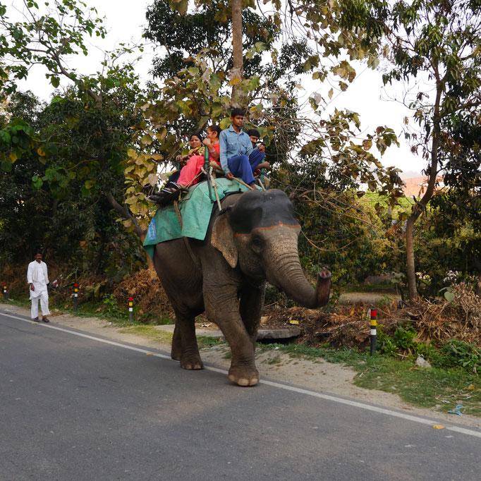 Reitelefant Straßenbild