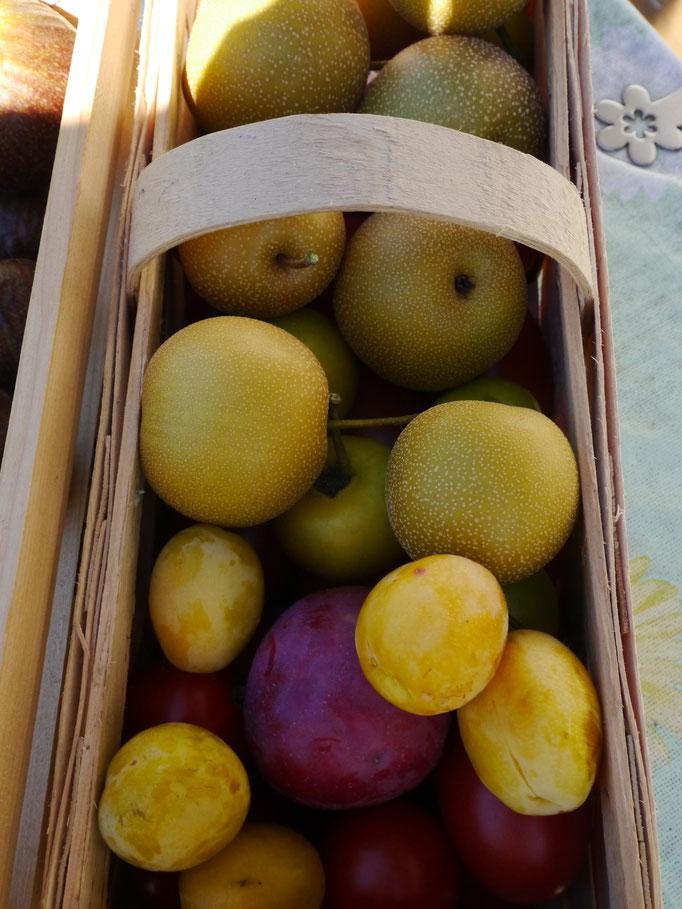 Bunter Früchtesegen