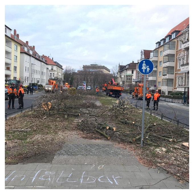 Um 8.20 Uhr gab es auf dem Abschnitt zwischen Moltkestr. und Kasernenstr. keinen Baum mehr.