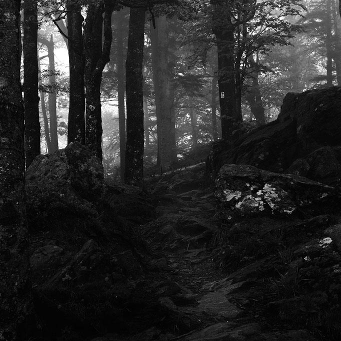 Thomashütte, Weg zur Schutzhütte unterhalb des Kandelgipfels