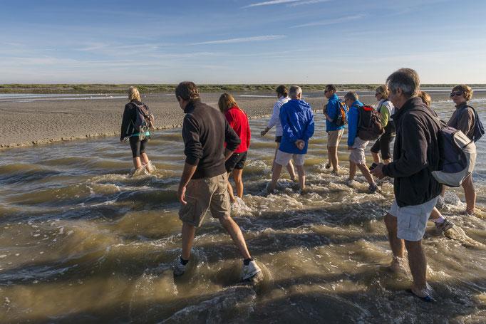 Traversée de la baie de Somme avec un guide