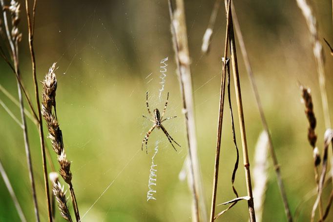 Achtsamkeit in der Natur