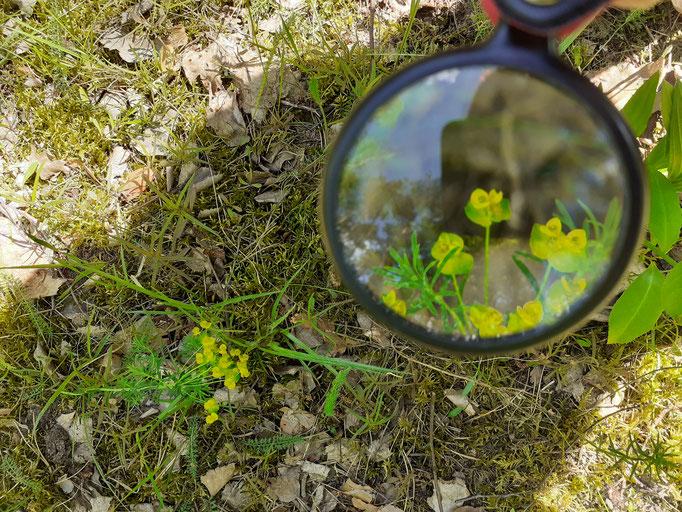 die Natur erforschen beim Waldbaden in Berlin