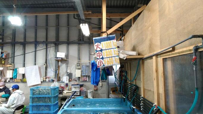 苅田漁港の牡蠣