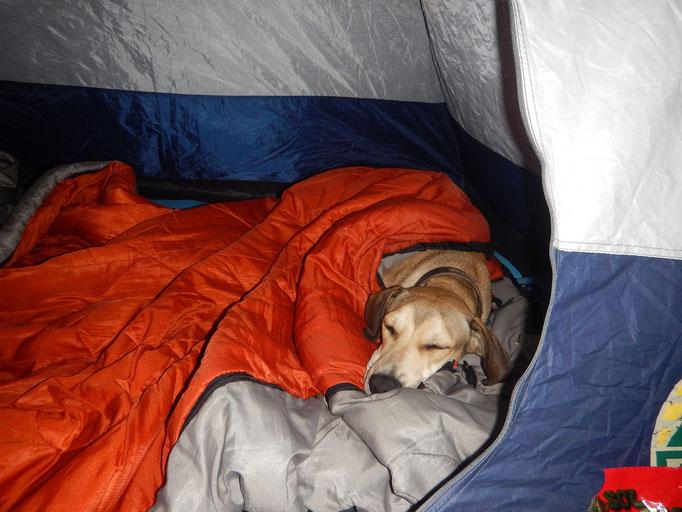 Wyatt verzieht sich frühzeitig ins Schlafgemach :-)