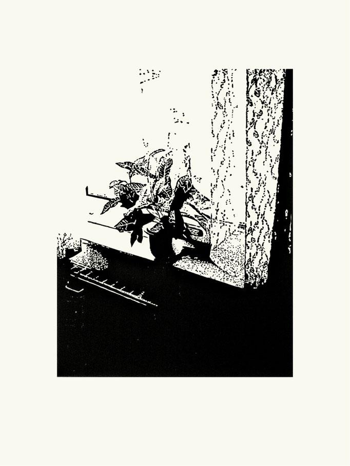 Fleischerblume | 60 x 40 cm | Linoldruck auf Papier | 2013