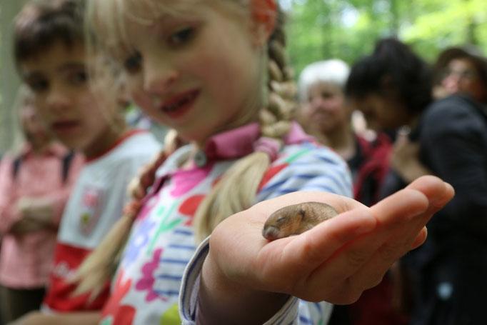 Kinder fanden eine kleine Maus