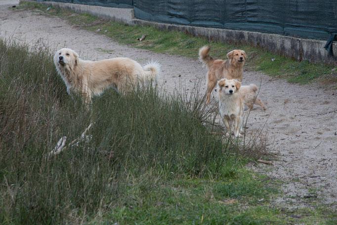 Eine Hundefamilie, die frei lebt. Ein Glück, dass der Campingplatz auch im Winter geöffnet hat.