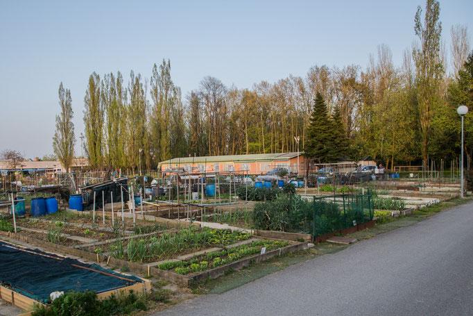 In einer Parkanlage sind die Kleingärtner, das Gebäude im Hintergrund ist eine Sozial - Station