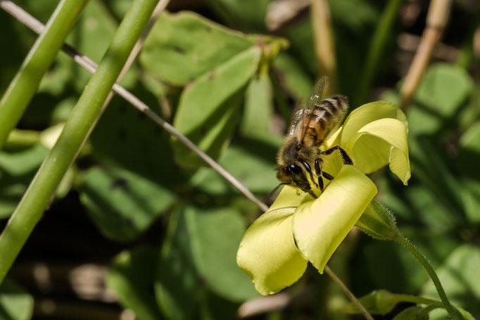 die Bienen haben es schon sehr wichtig