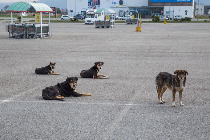 Diese Hundefamilie hat den Supermarkt voll unter Kontrolle