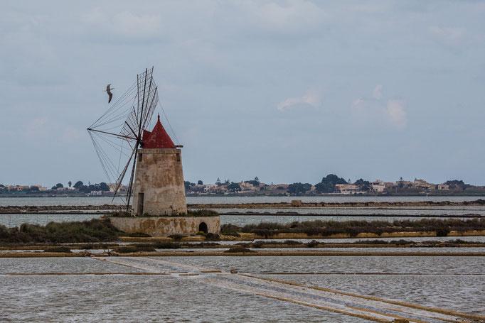 Man sieht viel Windmühlen
