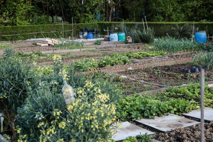 Man kann sich sicher so ein kleines Stück Garten pachten.