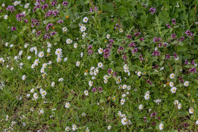 herrliche Blumenteppiche
